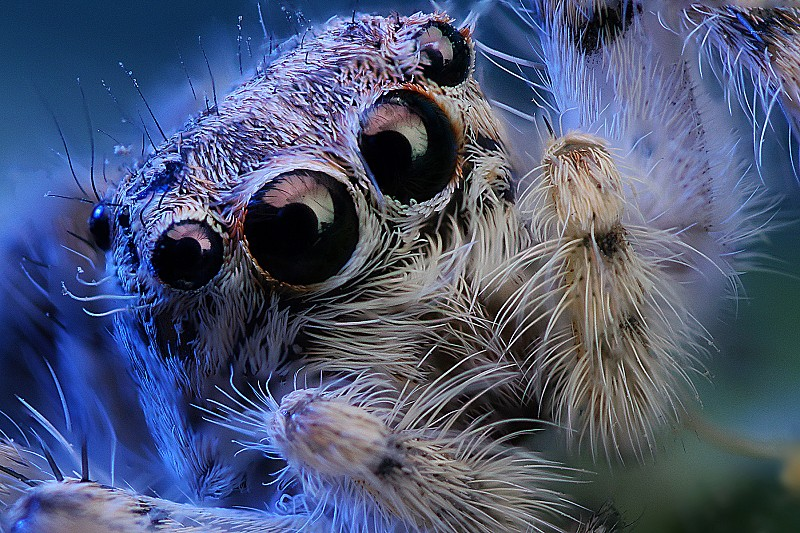 Spider-Eyes.jpg